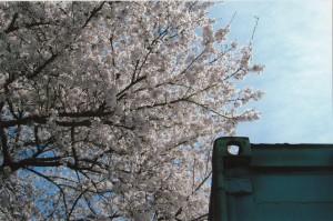 桜_0006