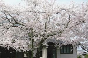桜_0002