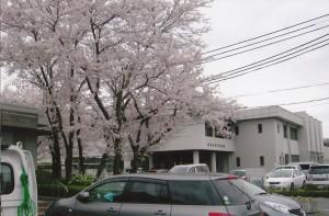 桜_0007