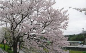 桜_00010